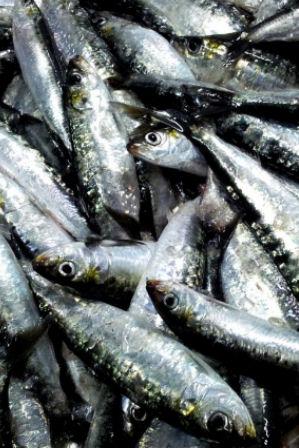 Filetes de sardinha em tomatada de algas e farofa sobre tiras de milho